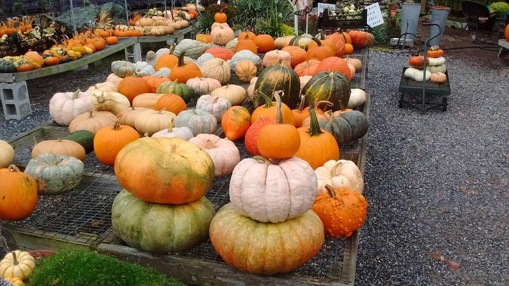 Hueters Greenhouse - store  | Photo 8 of 9 | Address: 3465 Deininger Rd, York, PA 17406, USA | Phone: (717) 755-5629