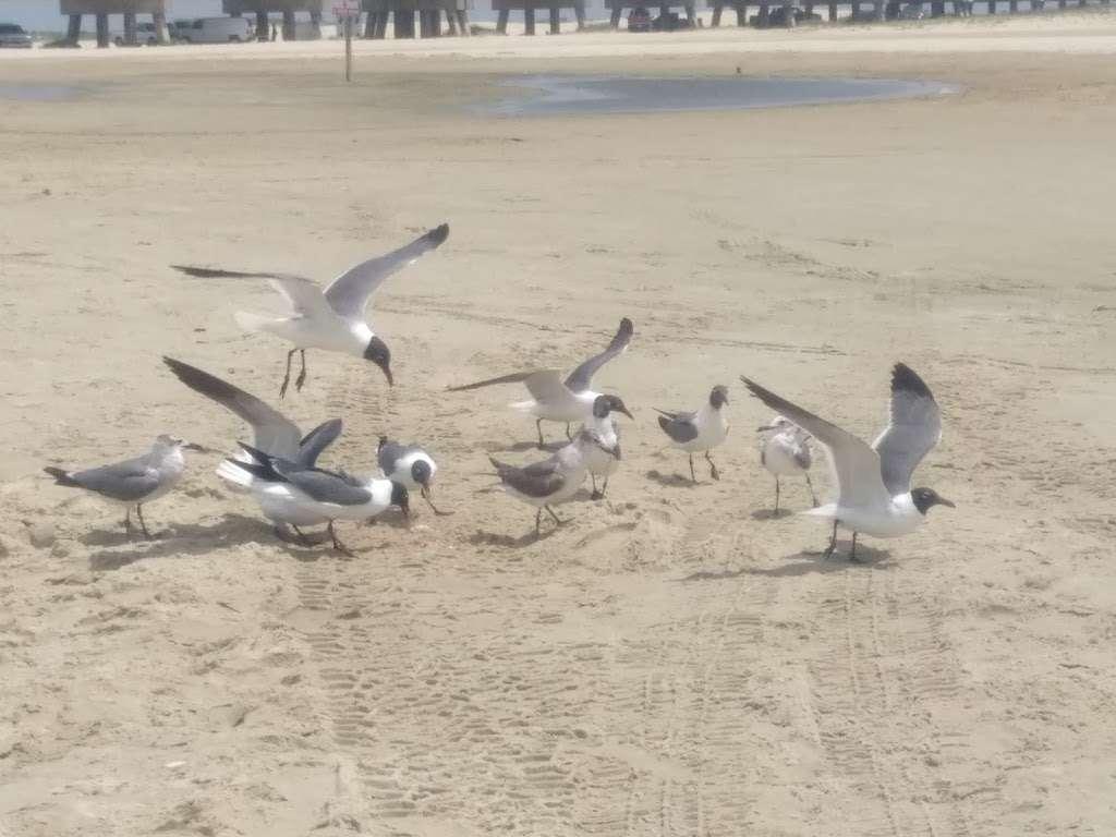 3D Beach - lodging  | Photo 2 of 10 | Address: 13115 Gulf Beach Dr, Freeport, TX 77541, USA | Phone: (713) 204-8054