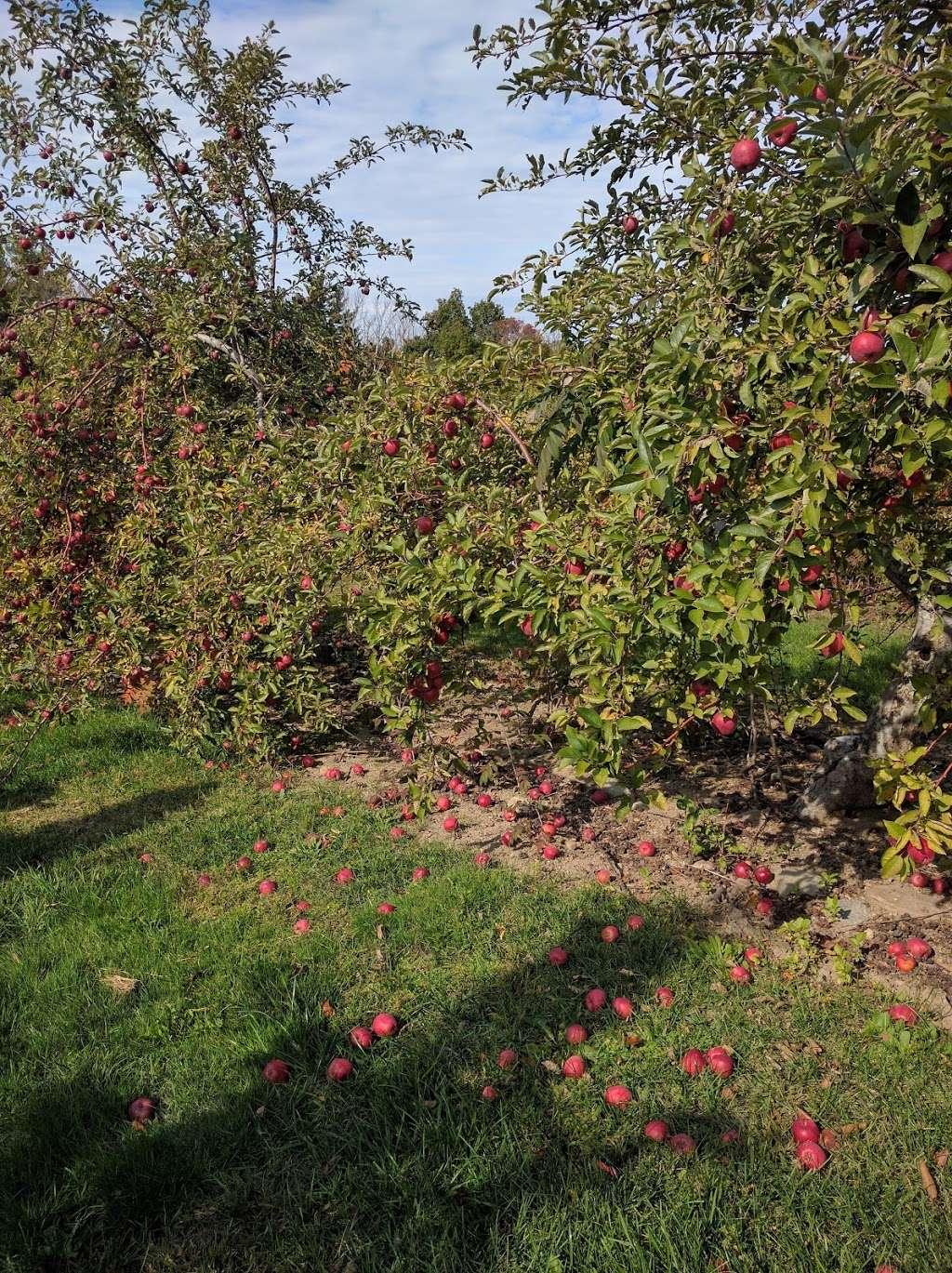 Nagog Hill Orchard - park  | Photo 5 of 10 | Address: 140 Nashoba Rd, Littleton, MA 01460, USA