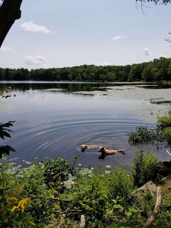 Moon Lake State Forest Recreation Area - park  | Photo 2 of 10 | Address: Hunlock Creek, PA 18621, USA