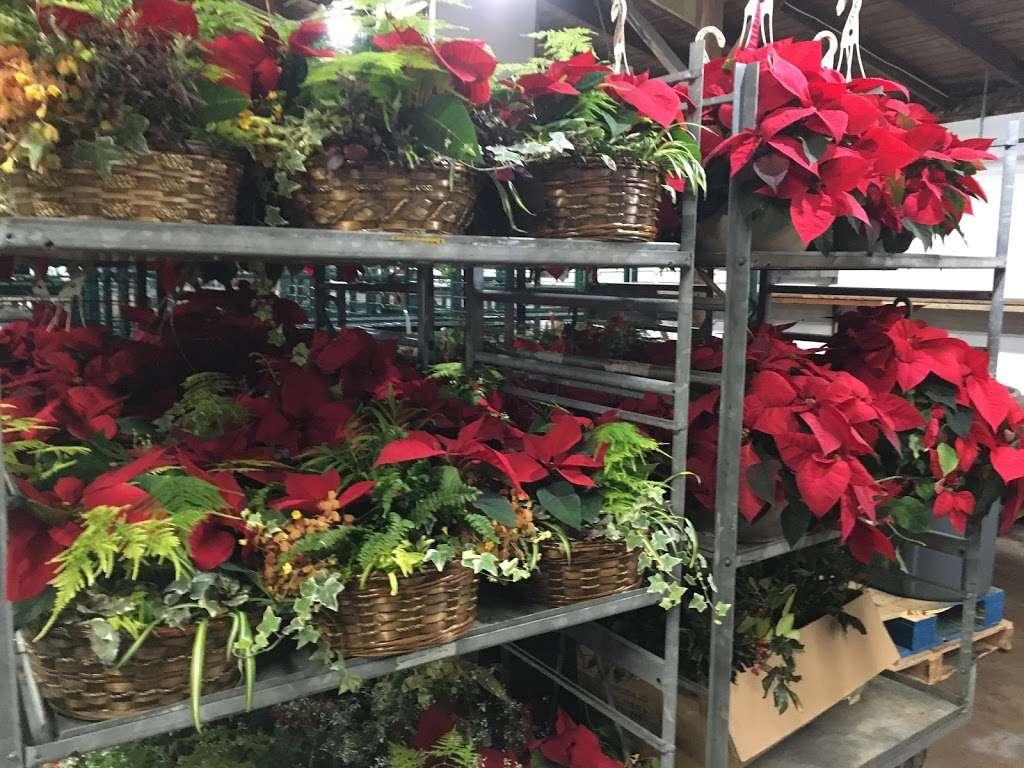 Stover's Produce Auction LLC - store  | Photo 6 of 8 | Address: 705 Graystone Rd, Manheim, PA 17545, USA | Phone: (717) 898-0666