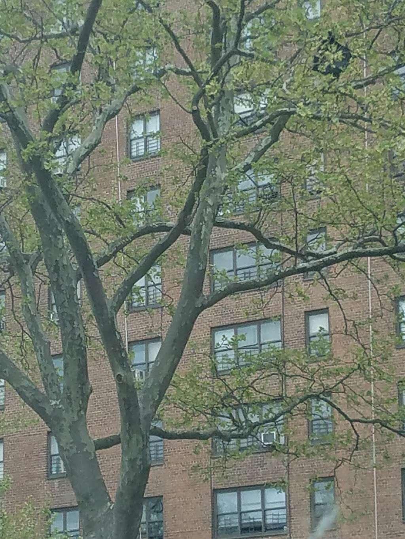 Randall Playground - park  | Photo 10 of 10 | Address: 2125 Randall Ave, Bronx, NY 10473, USA