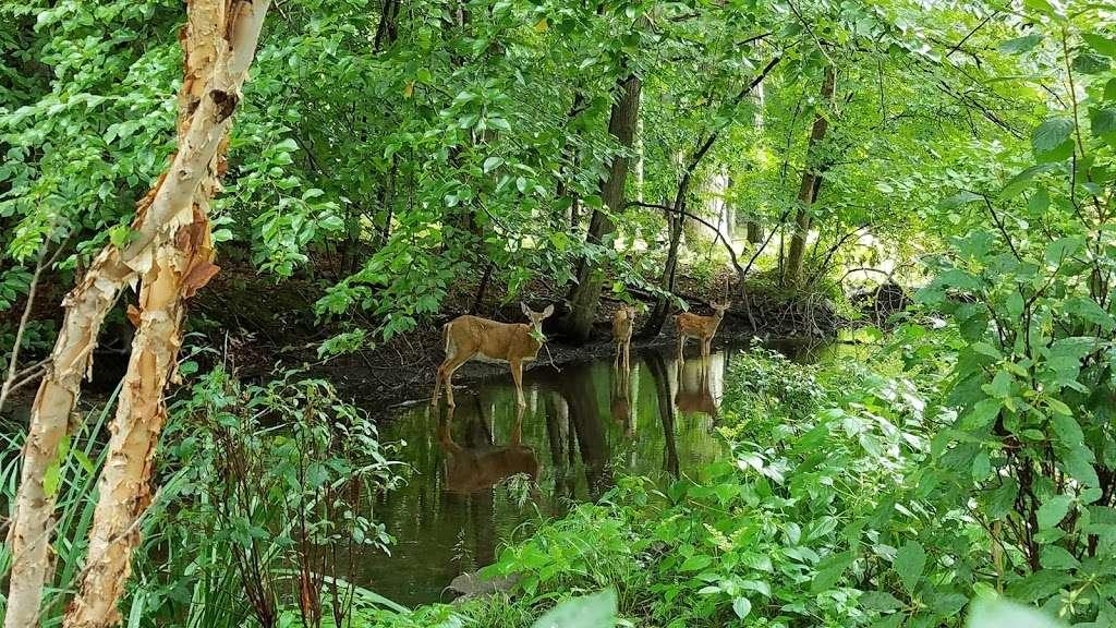Lillian Wadsworth Arboretum - park    Photo 4 of 10   Address: 2 Woodside Ln, Westport, CT 06880, USA   Phone: (203) 341-1120