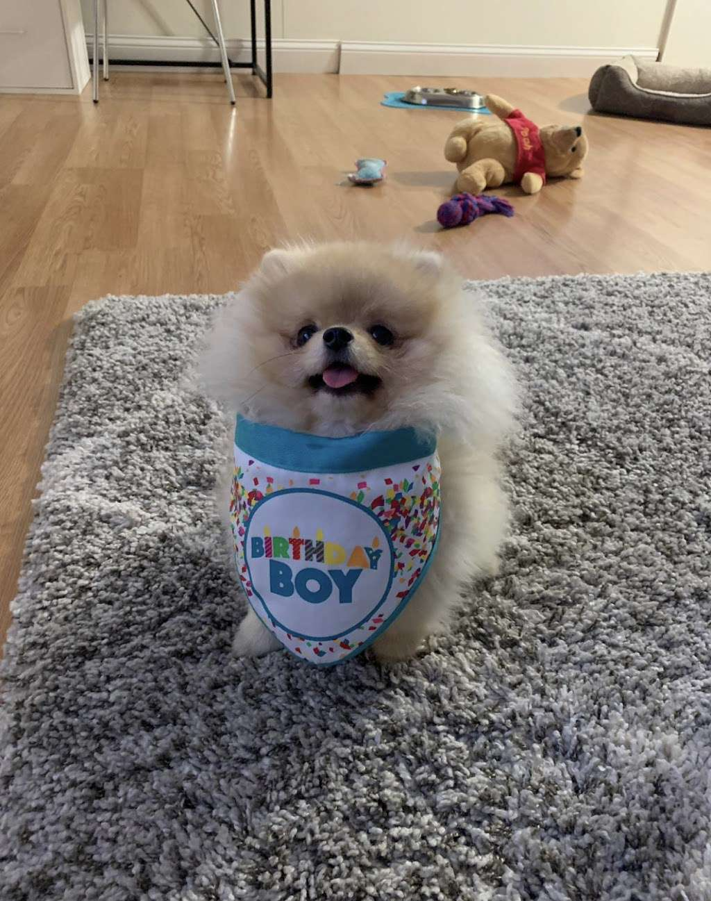 Pomeranian Puppies, Boutique - pet store  | Photo 9 of 10 | Address: Houston, TX, USA | Phone: (650) 303-1599