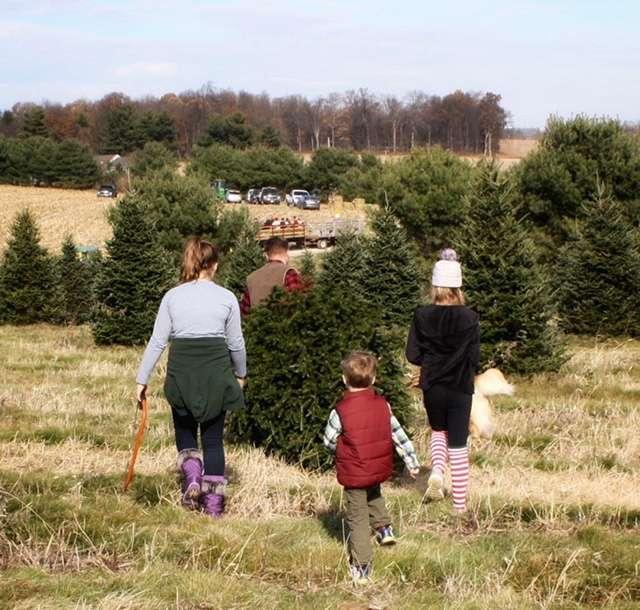 Family Tree Farm, LLC - store  | Photo 1 of 10 | Address: 4688 Dairy Rd, Red Lion, PA 17356, USA | Phone: (717) 332-6365