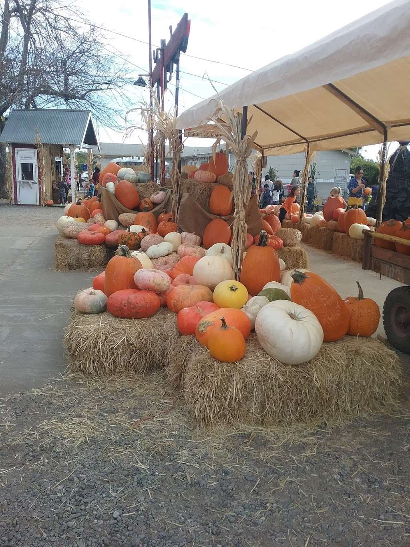 Silveyville Christmas Tree and Pumpkin Farm - store  | Photo 5 of 9 | Address: 6248 Silveyville Rd, Dixon, CA 95620, USA | Phone: (707) 678-1823