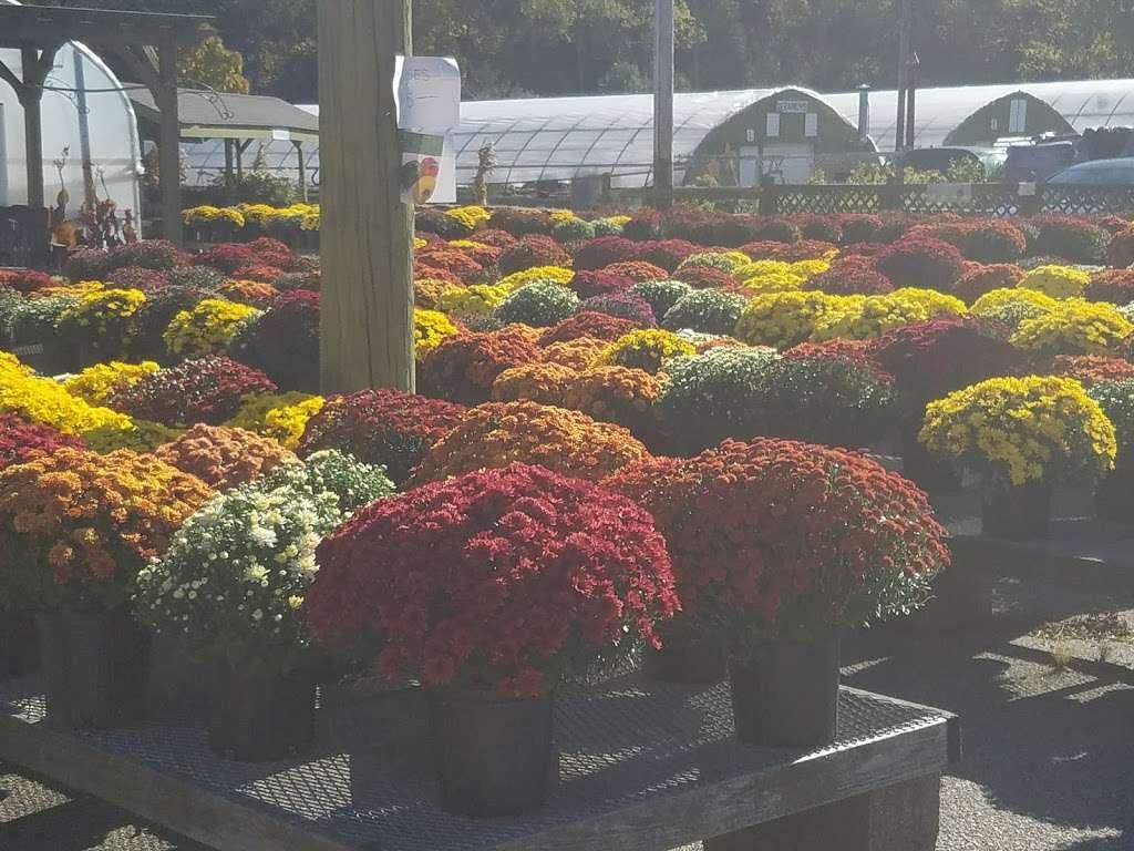 Ideal Farm Garden Center - store  | Photo 9 of 10 | Address: 222 NJ-15, Lafayette Township, NJ 07848, USA | Phone: (973) 579-3893