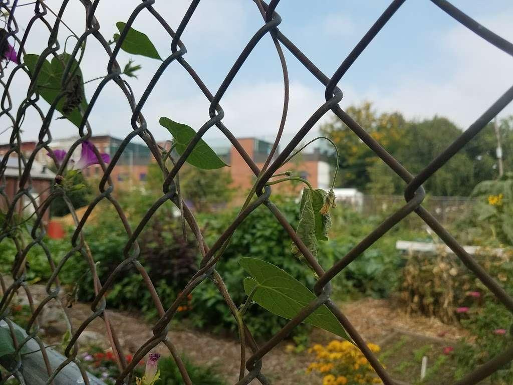 Phoenix Community Garden - park  | Photo 10 of 10 | Address: 2037 Fulton St, Brooklyn, NY 11233, USA | Phone: (212) 788-7900