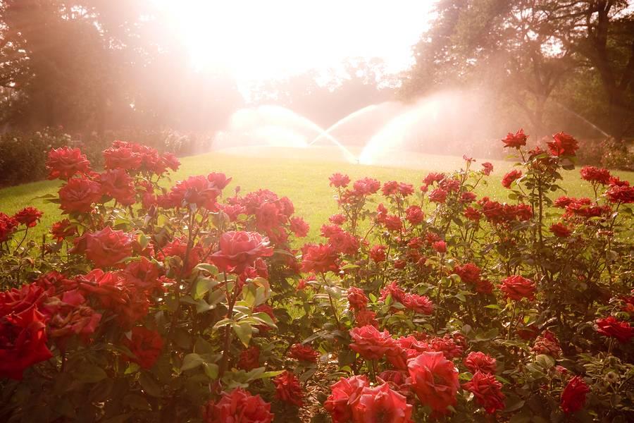 Edwards Greenhouse - florist  | Photo 1 of 10 | Address: 4106 Sand Creek St, Boise, ID 83703, USA | Phone: (208) 342-7548