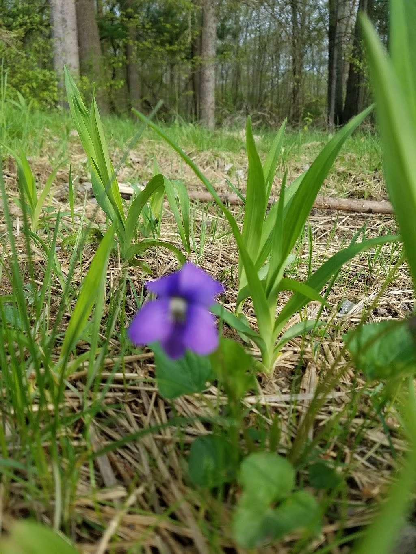 Moon Lake State Forest Recreation Area - park  | Photo 6 of 10 | Address: Hunlock Creek, PA 18621, USA