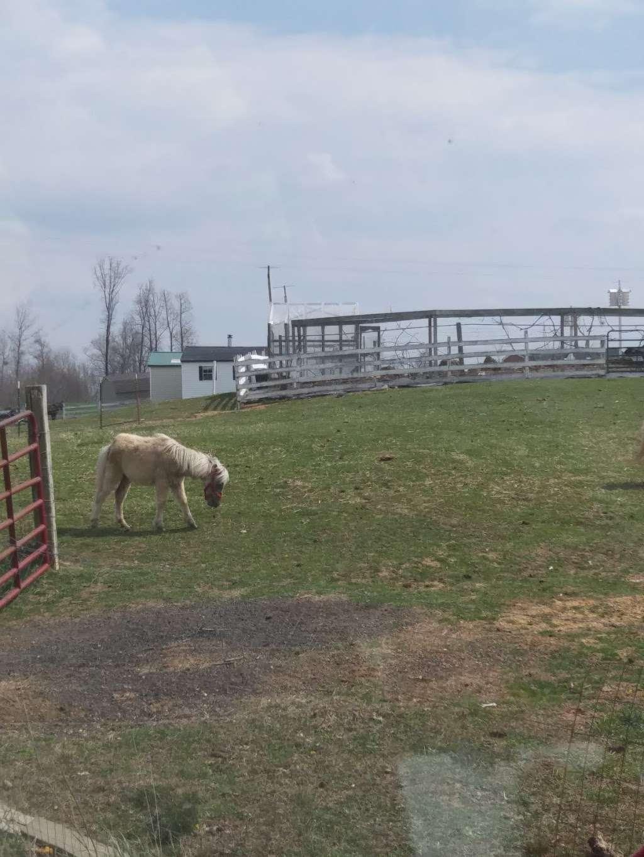 Amish Farm - store    Photo 5 of 5   Address: 27630 Westham Ln, Mechanicsville, MD 20659, USA