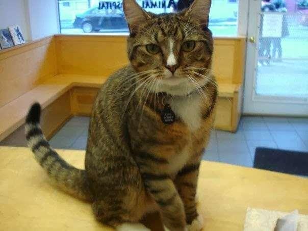 Greenwich Village Animal Hospital - veterinary care  | Photo 1 of 4 | Address: 504 Hudson St, New York, NY 10014, USA | Phone: (212) 691-1100