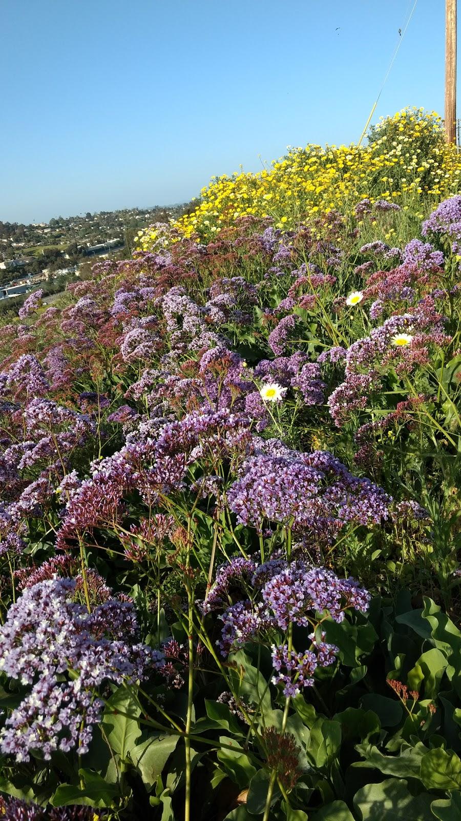 Joseph Carrasco Park - park  | Photo 2 of 8 | Address: 2506 Skylark Dr, Oceanside, CA 92054, USA | Phone: (760) 435-5041