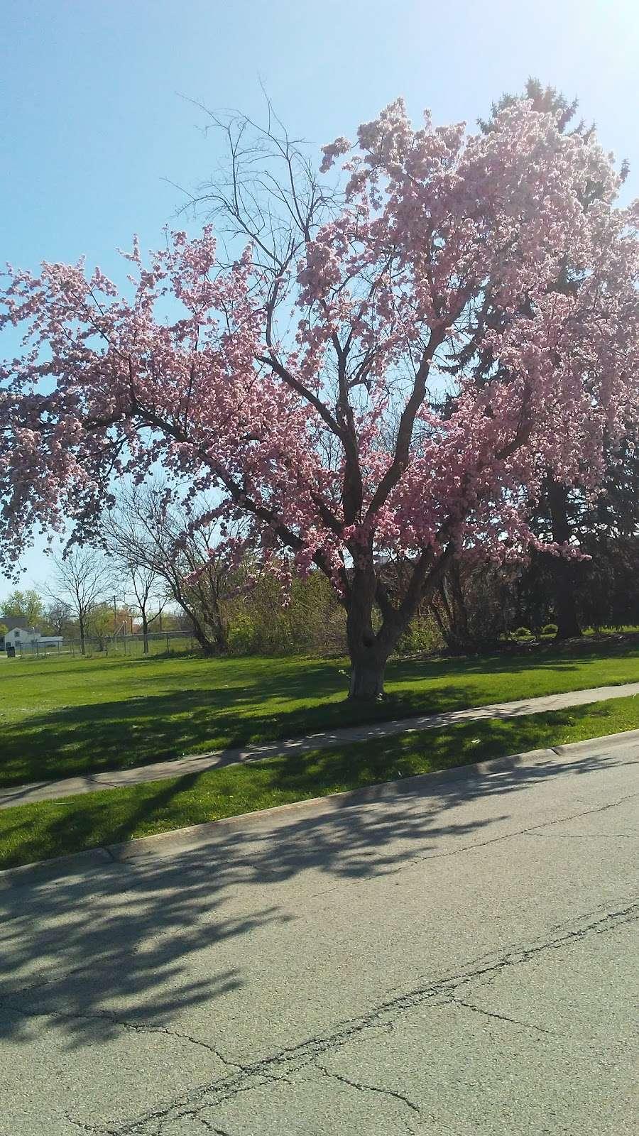 Chino Park - park  | Photo 6 of 10 | Address: 630 Illinois Blvd, Hoffman Estates, IL 60169, USA | Phone: (847) 885-7500