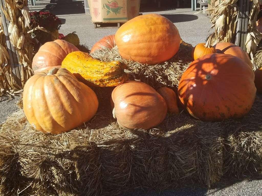 Ideal Farm Garden Center - store  | Photo 7 of 10 | Address: 222 NJ-15, Lafayette Township, NJ 07848, USA | Phone: (973) 579-3893