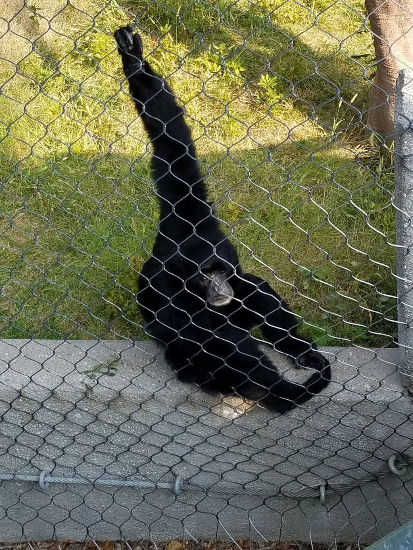 Hubbard Orangutan Forest - zoo    Photo 9 of 9   Address: 2119170000, Omaha, NE 68108, USA   Phone: (402) 733-8401