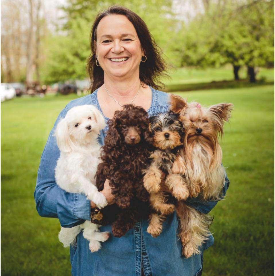 DEBORAHS YORKIES - pet store  | Photo 2 of 6 | Address: 248 Thornton Dr, Mcconnellsburg, PA 17233, USA | Phone: (717) 816-4307