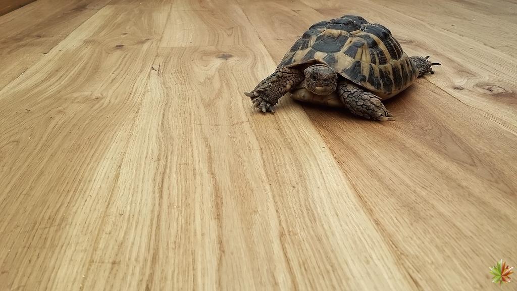 Surrey Flooring Services - store  | Photo 5 of 10 | Address: 65 Cotterill Rd, Surbiton KT6 7UJ, UK | Phone: 020 8875 1260