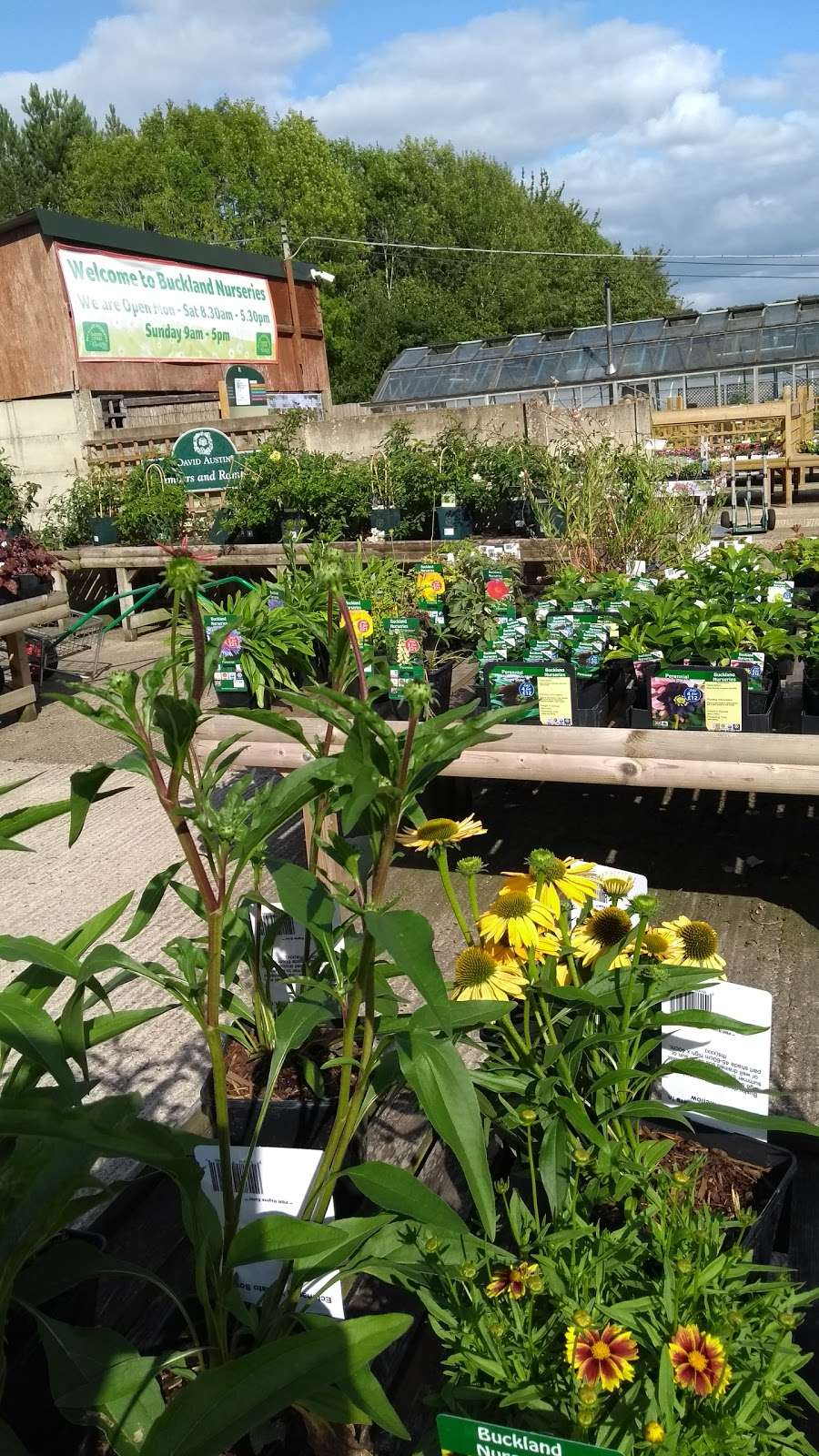 Buckland Nurseries Garden Centre - store  | Photo 2 of 10 | Address: Reigate Rd, Reigate, Betchworth RH2 9RE, UK | Phone: 01737 242990
