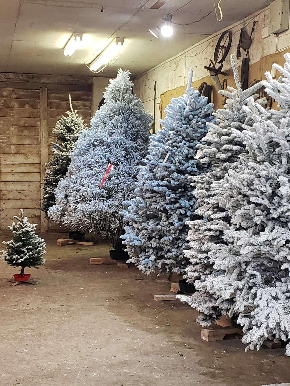 Silveyville Christmas Tree and Pumpkin Farm - store  | Photo 6 of 9 | Address: 6248 Silveyville Rd, Dixon, CA 95620, USA | Phone: (707) 678-1823
