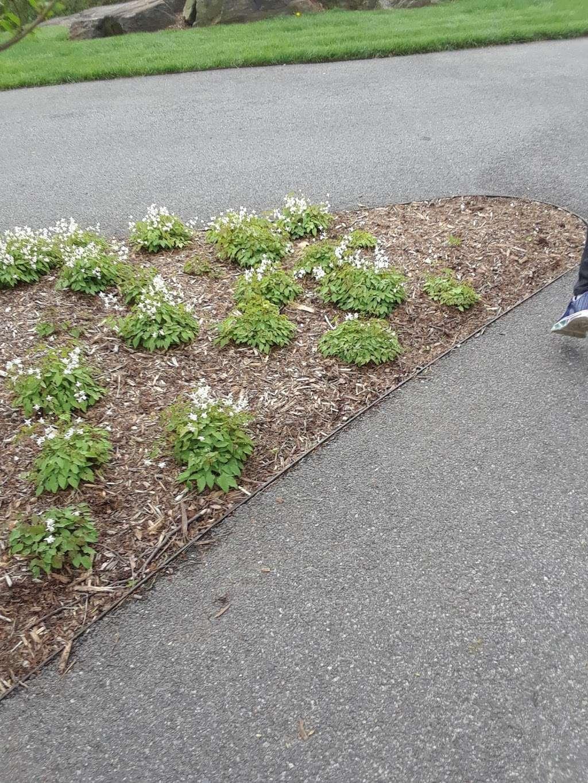 Lilac Collection - park  | Photo 2 of 10 | Address: Bronx Park Rd, Bronx, NY 10467, USA | Phone: (718) 817-8700