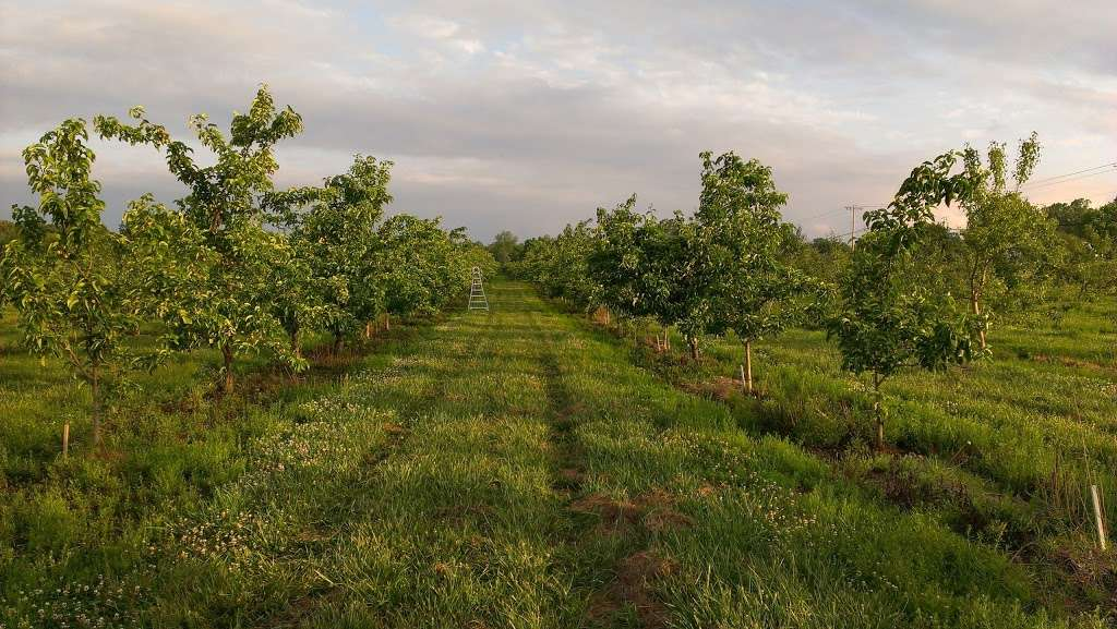 Fruitwood Farms, Inc. - store  | Photo 5 of 10 | Address: 419 Elk Rd, Monroeville, NJ 08343, USA | Phone: (856) 881-7748