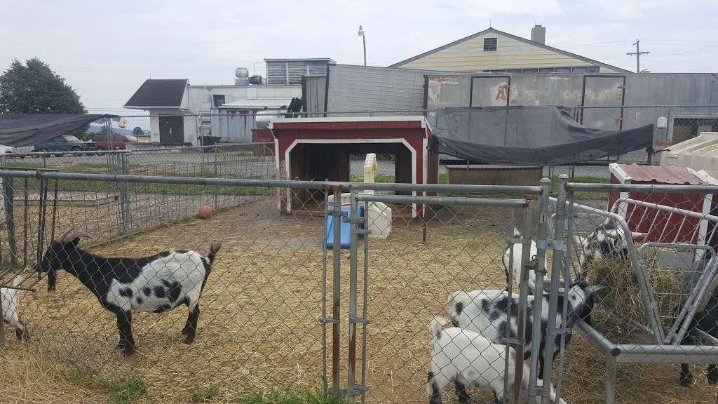 Oley Turnpike Dairy 6213 Oley Turnpike Rd Oley Pa 19547 Usa