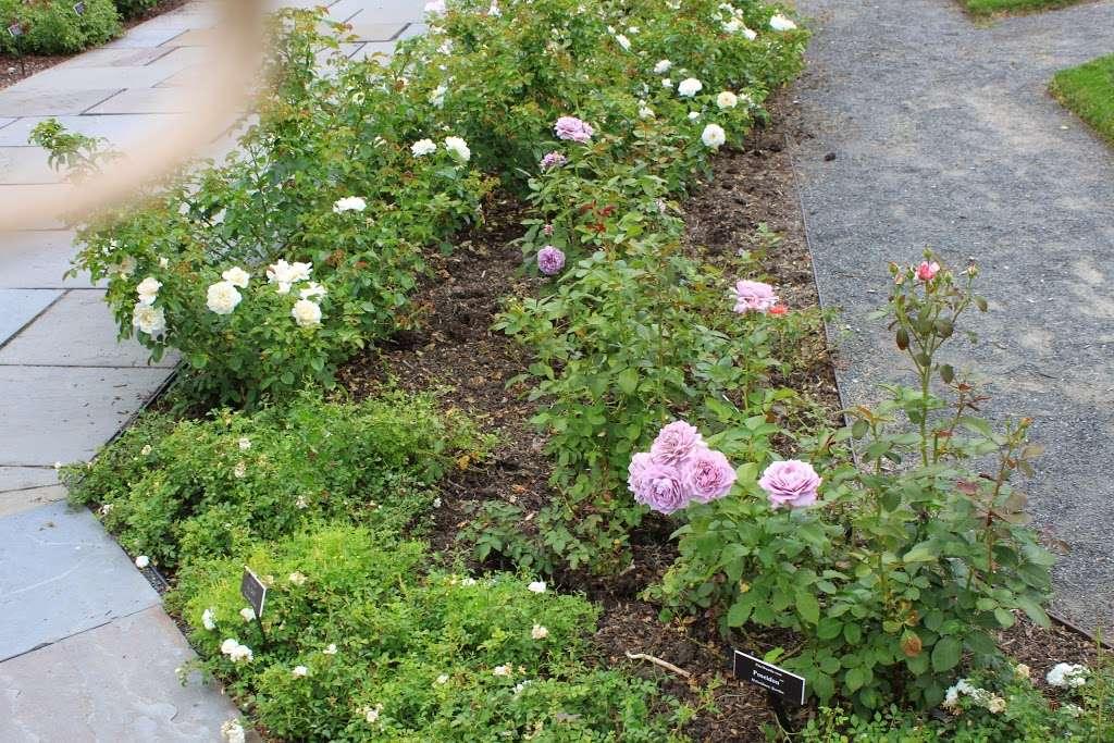 The Jane Watson Irwin Perennial Garden - park  | Photo 10 of 10 | Address: 2900 Southern Blvd, The Bronx, NY 10458, USA | Phone: (718) 817-8700