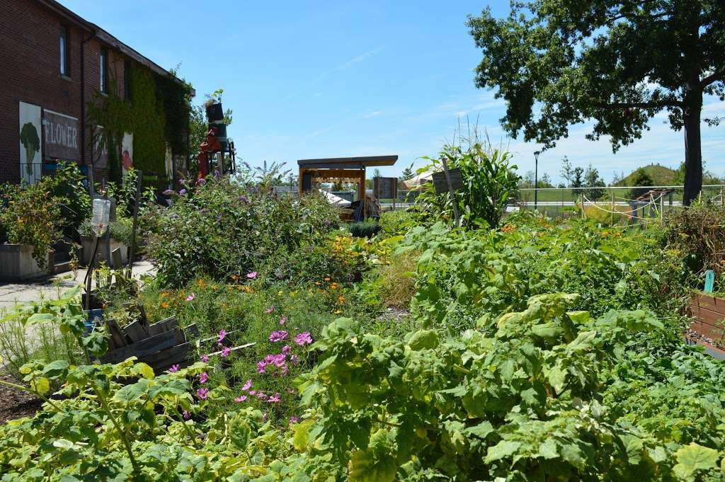 Governors Island Teaching Garden - park  | Photo 4 of 10 | Address: 778 Enright Rd, New York, NY 10004, USA | Phone: (212) 788-7900
