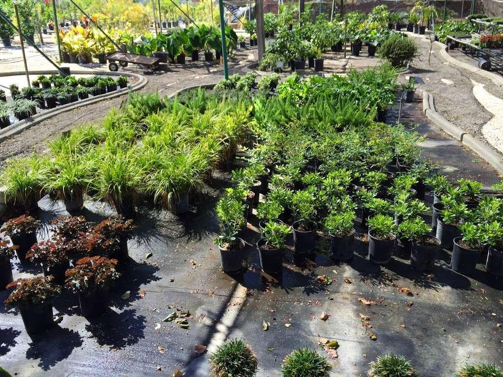 Green Tree Nursery 3977