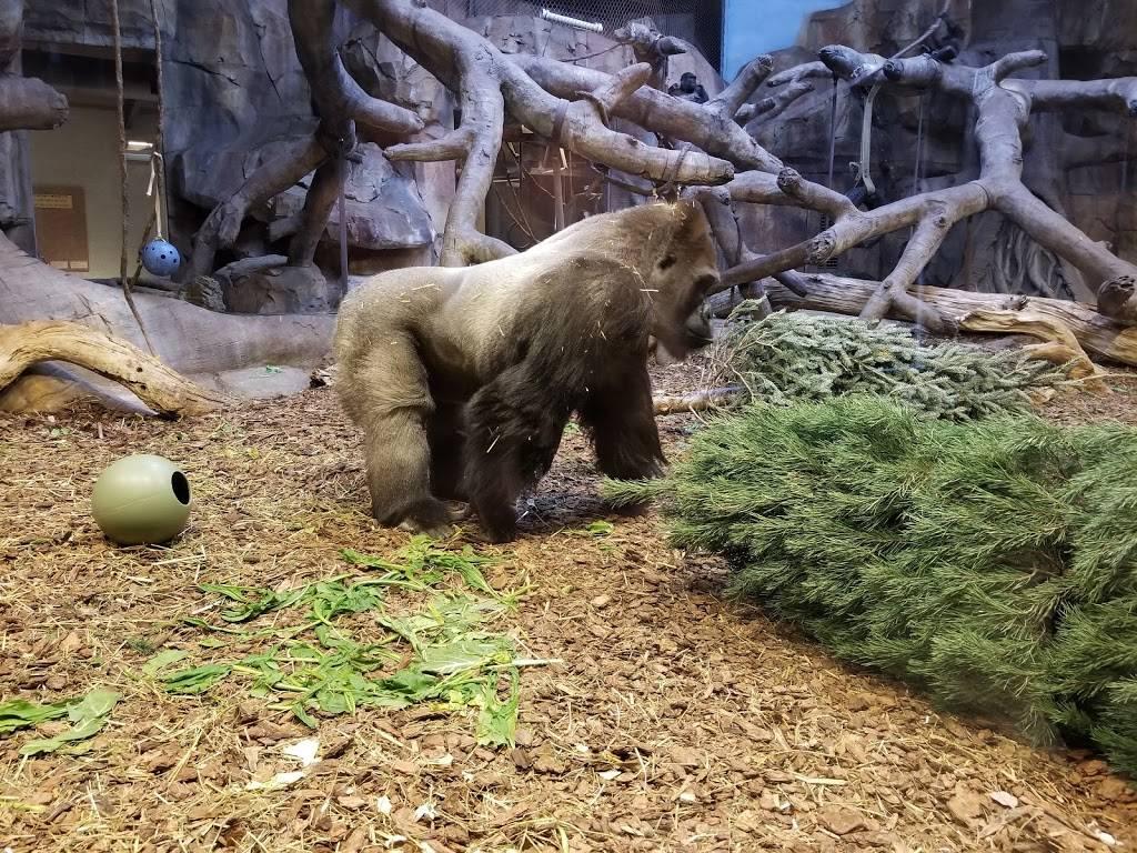 Hubbard Orangutan Forest - zoo    Photo 1 of 9   Address: 2119170000, Omaha, NE 68108, USA   Phone: (402) 733-8401