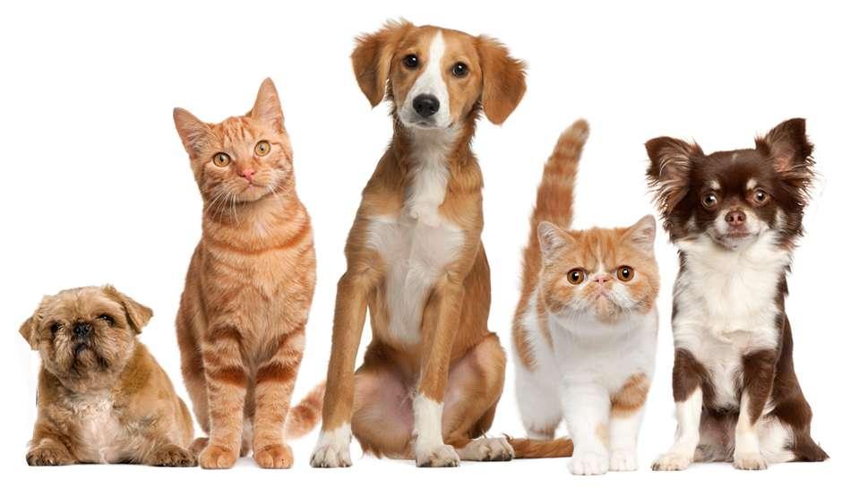 Tender Paws Animal Hospital - pharmacy  | Photo 1 of 10 | Address: 4235 N Frazier St, Conroe, TX 77303, USA | Phone: (936) 856-3339