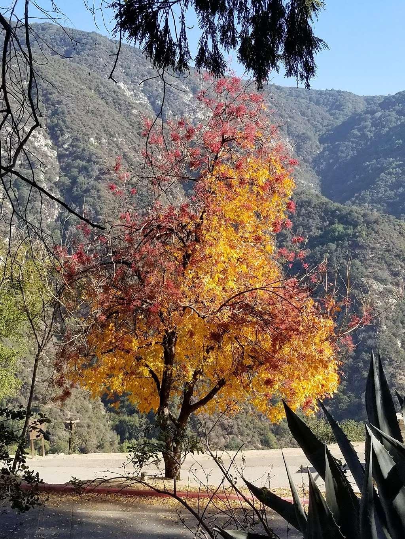 Sturtevant Falls Hiking Trailhead - park  | Photo 8 of 10 | Address: Forest Rte 2N40, Arcadia, CA 91006, USA