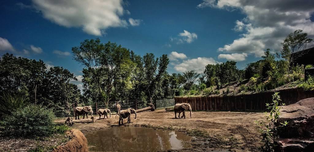 Elephant Amphitheater - zoo    Photo 7 of 10   Address: 3901-, 3999 S River Dr, Omaha, NE 68108, USA   Phone: (402) 733-8400