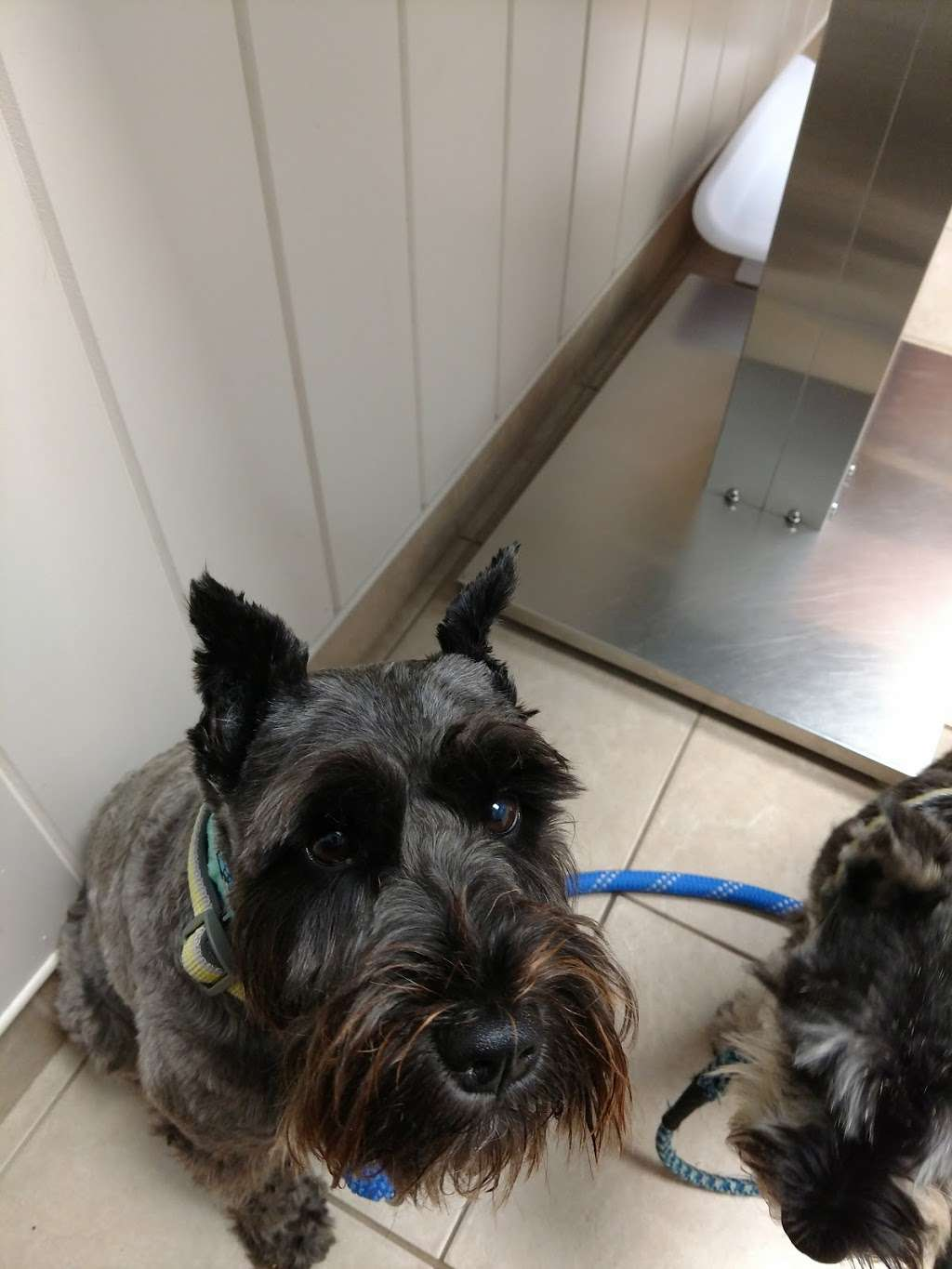 Scituate Animal Hospital - veterinary care  | Photo 4 of 9 | Address: 561 W Greenville Rd, Scituate, RI 02857, USA | Phone: (401) 647-3500