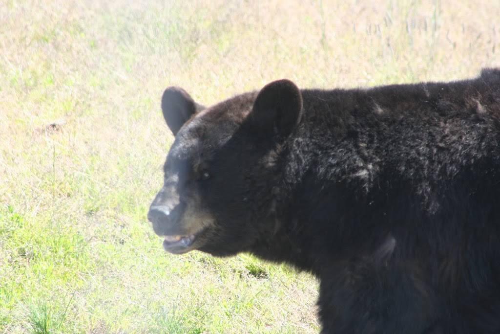 Alderwood Park - park  | Photo 6 of 10 | Address: 707 Elm St, Anchorage, AK 99501, USA | Phone: (907) 343-4355
