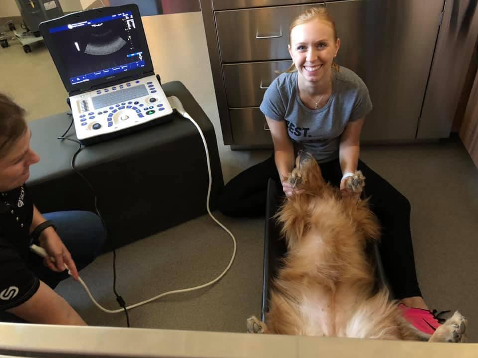 Wrentham Animal Hospital - hospital  | Photo 3 of 10 | Address: 5 Ledgeview Way, Wrentham, MA 02093, USA | Phone: (508) 576-8076