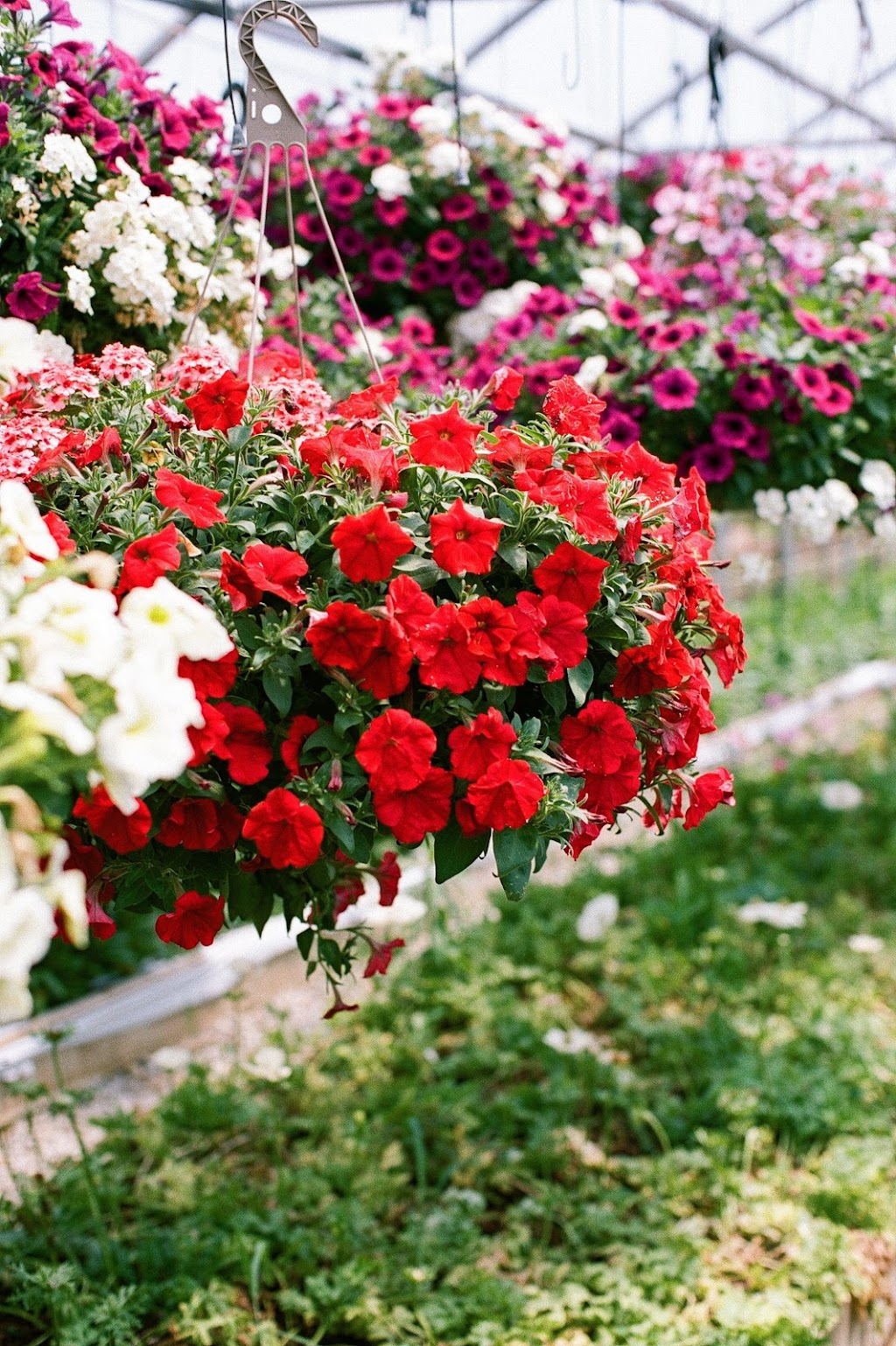 Pisarcik Flower Farm - florist    Photo 7 of 10   Address: 365 Browns Hill Rd, Valencia, PA 16059, USA   Phone: (724) 898-1434