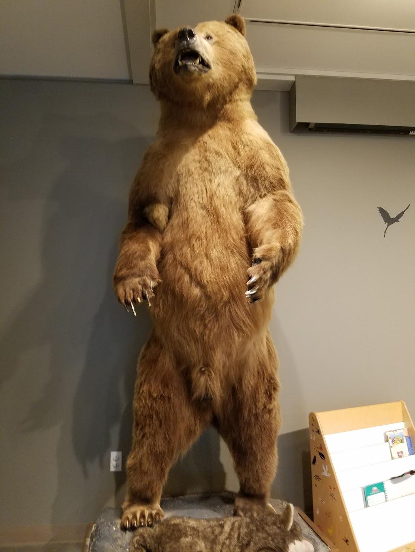 Lindsay Wildlife Experience - museum    Photo 4 of 10   Address: 1931 1st Ave, Walnut Creek, CA 94597, USA   Phone: (925) 935-1978