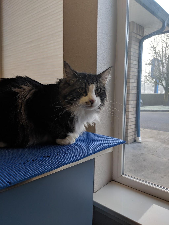 St. Francis Animal Hospital - pharmacy  | Photo 3 of 10 | Address: 12010 NE 65th St, Vancouver, WA 98682, USA | Phone: (360) 253-5446