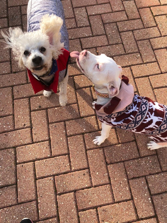Pet Supplies Plus Berwyn - pet store  | Photo 10 of 10 | Address: 7133 Cermak Rd, Berwyn, IL 60402, USA | Phone: (708) 318-4243