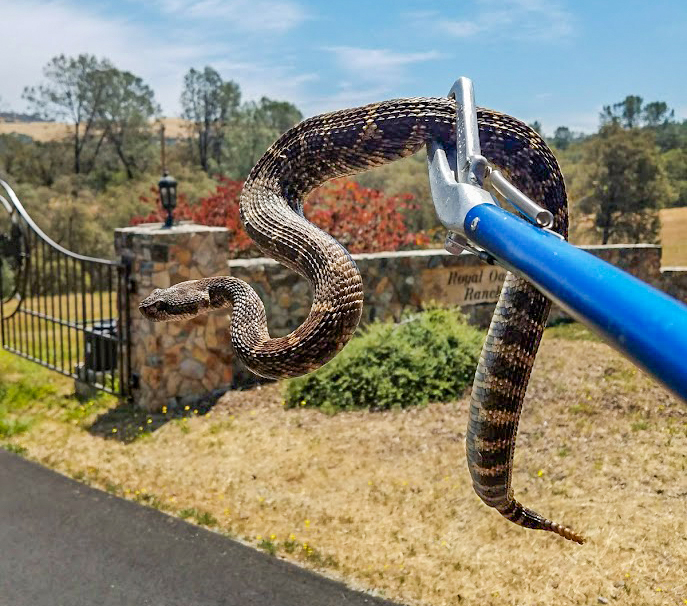 Placer Snake Removal - home goods store  | Photo 5 of 10 | Address: 3995 Clover Valley Rd, Rocklin, CA 95677, USA | Phone: (916) 509-1087