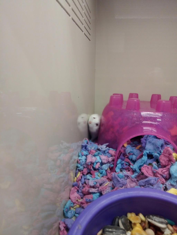 Pet Supplies Plus Villa Park - pet store  | Photo 8 of 10 | Address: 198B W North Ave, Villa Park, IL 60181, USA | Phone: (630) 617-5600