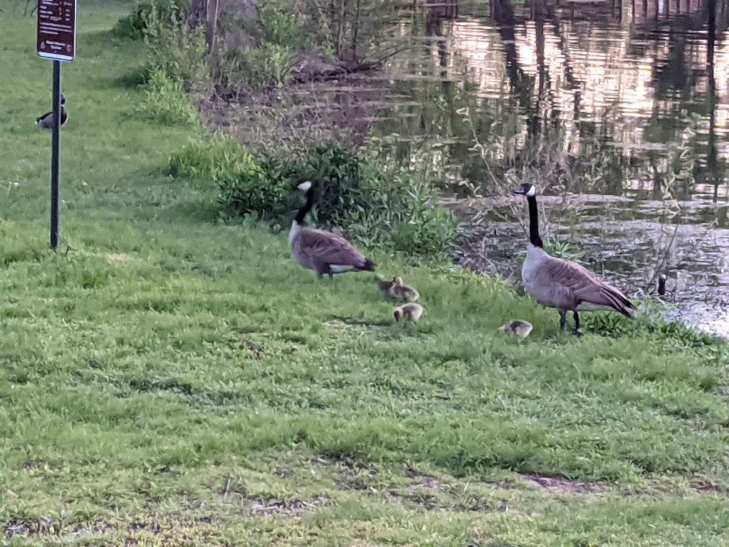 Tilles Park - park  | Photo 8 of 10 | Address: 9551 Litzsinger Rd, St. Louis, MO 63124, USA | Phone: (314) 615-4386