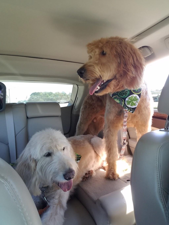 Pet Doctors of America - veterinary care    Photo 8 of 10   Address: 14471 Beach Blvd, Jacksonville, FL 32250, USA   Phone: (904) 223-5700