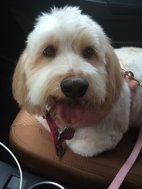 Zen Pet Spa - pet store  | Photo 4 of 10 | Address: 15420 SW 136th St UNIT 60, Miami, FL 33196, USA | Phone: (786) 581-9233