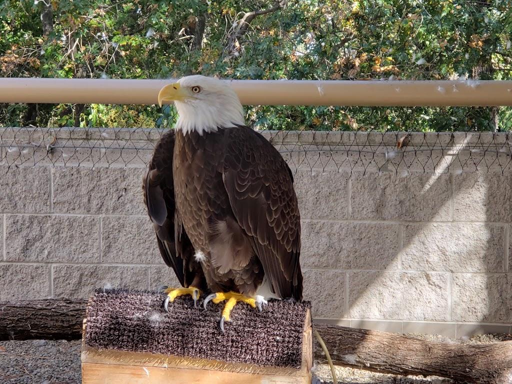 Lindsay Wildlife Experience - museum    Photo 2 of 10   Address: 1931 1st Ave, Walnut Creek, CA 94597, USA   Phone: (925) 935-1978