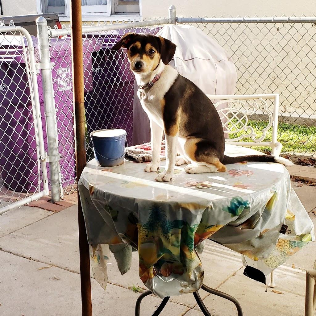 Golden State Humane Society - veterinary care  | Photo 6 of 10 | Address: 555 E Artesia Blvd, Long Beach, CA 90805, USA | Phone: (562) 423-8406