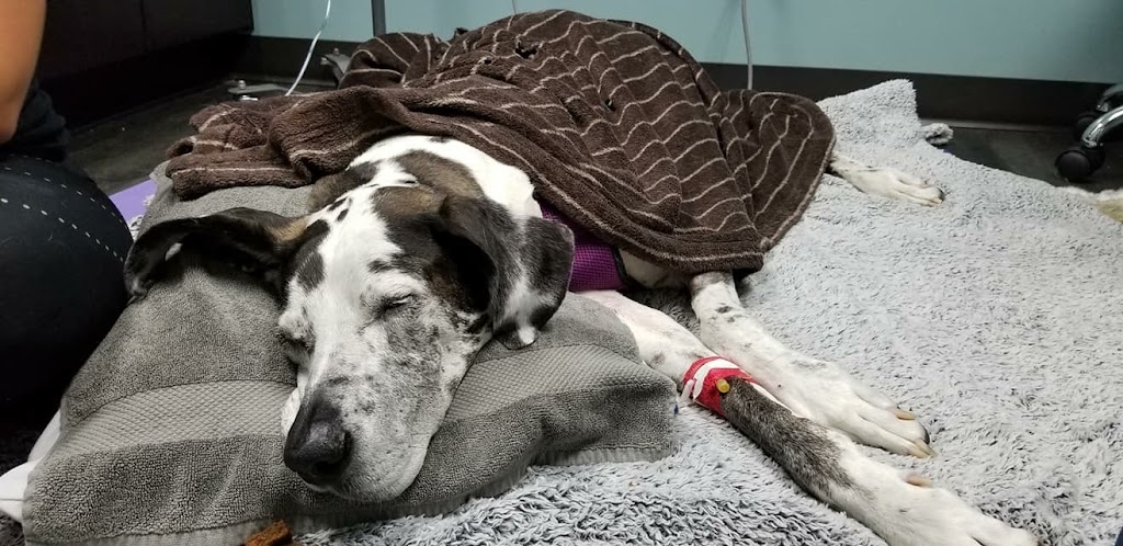 Pet Doctors of America - veterinary care    Photo 7 of 10   Address: 14471 Beach Blvd, Jacksonville, FL 32250, USA   Phone: (904) 223-5700