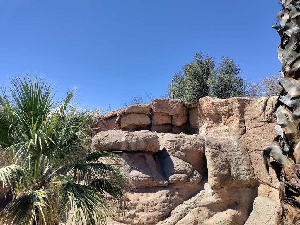 Arizona-Sonora Desert Museum - zoo  | Photo 1 of 10 | Address: 2021 N Kinney Rd, Tucson, AZ 85743, USA | Phone: (520) 883-1380